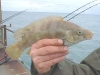 The Wrasse